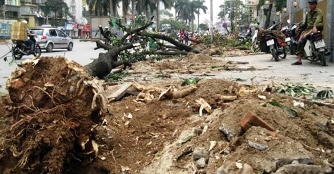 Hàng loạt cây bị đốn hạ nằm ngổn ngang trên hè tuyến đường Nguyễn Chí Thanh
