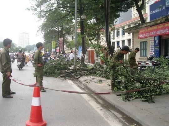 Công nhân phong tỏa vỉa hè khi đang tiến hành chặt hạ cây