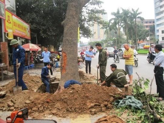 Đình chỉ công tác hàng loạt cán bộ liên quan vụ chặt cây xanh Hà Nội ảnh 4