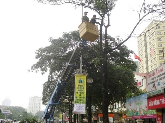 Đình chỉ công tác hàng loạt cán bộ liên quan vụ chặt cây xanh Hà Nội ảnh 5