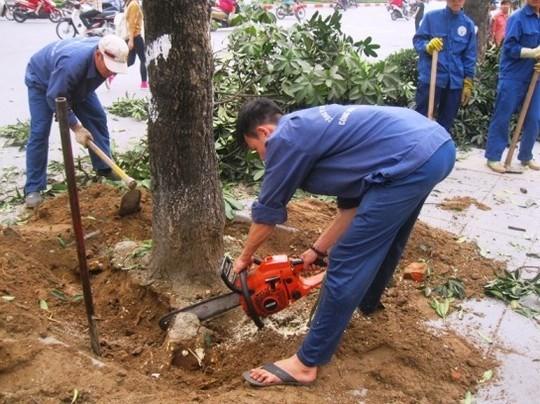 Đình chỉ công tác hàng loạt cán bộ liên quan vụ chặt cây xanh Hà Nội ảnh 7