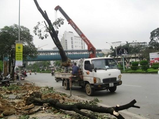 Chiến dịch đốn hạ cây xanh của Hà Nội thể hiện sự vội vã, thiếu suy xét nên đã vấp phải phản ứng quyết liệt của người dân và dư luận