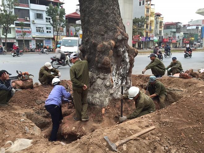 Đình chỉ công tác hàng loạt cán bộ liên quan vụ chặt cây xanh Hà Nội ảnh 1