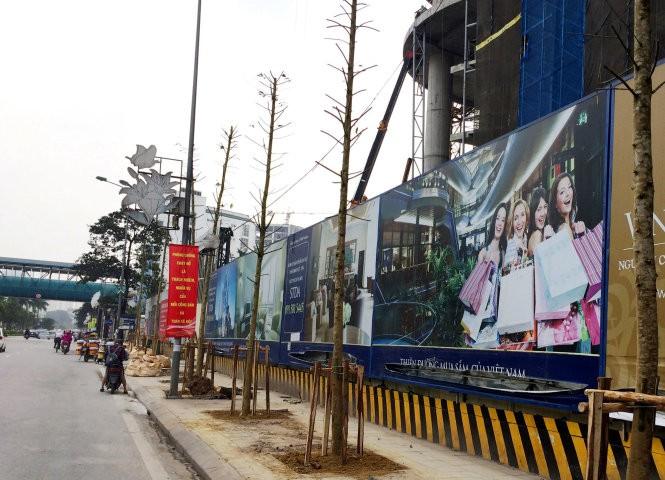 Số cây được cho là vàng tâm mới trồng trên đường Nguyễn Chí Thanh