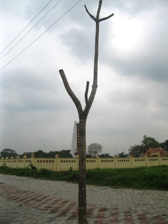 Rất nhiều cây chết khô xếp hàng hai bên đường 5 kéo dài
