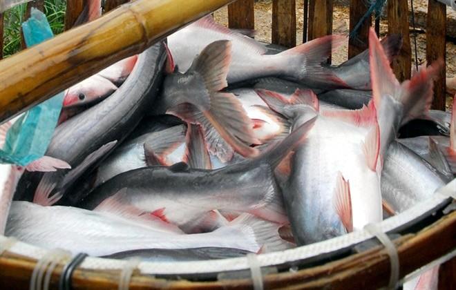 Gạo, cá Việt Nam: Mũi nhọn hội nhập, 'thua trận' khắp nơi ảnh 1