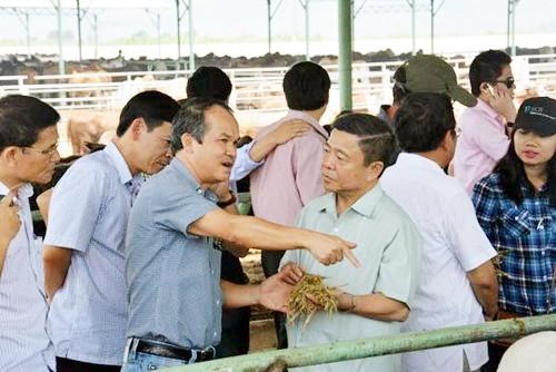 Hà Tĩnh: 3 sở, 6 huyện khảo sát tìm đất cho bầu Đức nuôi bò ảnh 1