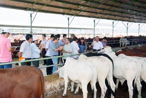 Hà Tĩnh: 3 sở, 6 huyện khảo sát tìm đất cho bầu Đức nuôi bò ảnh 2