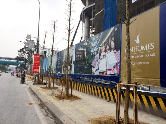 Hà Nội lại thay cây mỡ mới trồng trên phố Nguyễn Chí Thanh ảnh 1