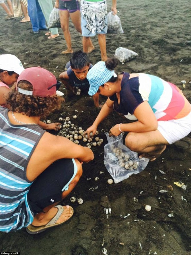 Kỳ thú hàng trăm ngàn con rùa biển lớn ùa vào bờ ảnh 3