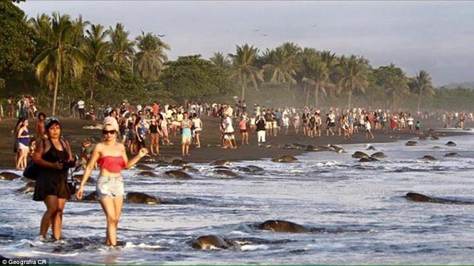 Hàng ngàn du khách và dân địa phương đổ ra biển chặn đường lũ rùa biển