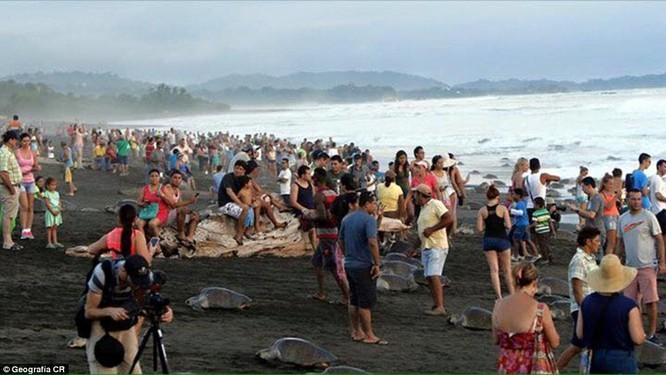 Kỳ thú hàng trăm ngàn con rùa biển lớn ùa vào bờ ảnh 8