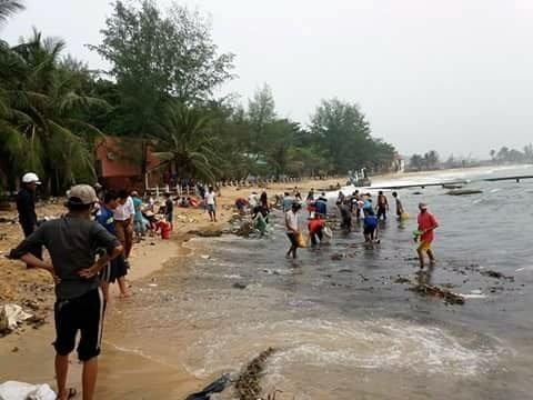 Hàng ngàn con hải sâm dạt vào Phú Quốc, nguy cơ gì? ảnh 2