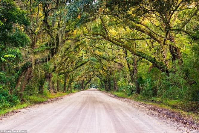 Một con đường lãng mạn ở Edisto Island, South Carolina, Mỹ