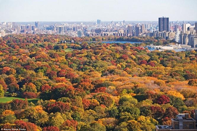 Thu về Công viên trung tâm New York