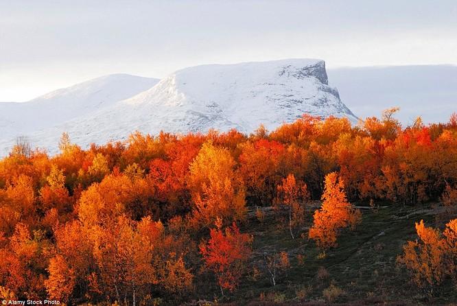 Sắc thu nhuộm vàng công viên quốc gia Abisko, Thụy Điển