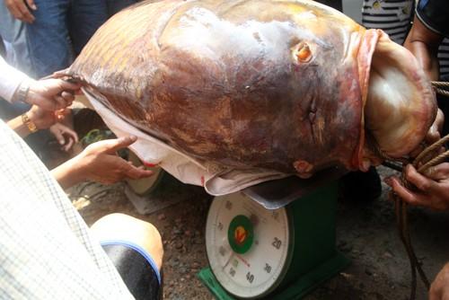 Những loại cá bán đắt 'như vàng' ở Việt Nam ảnh 2
