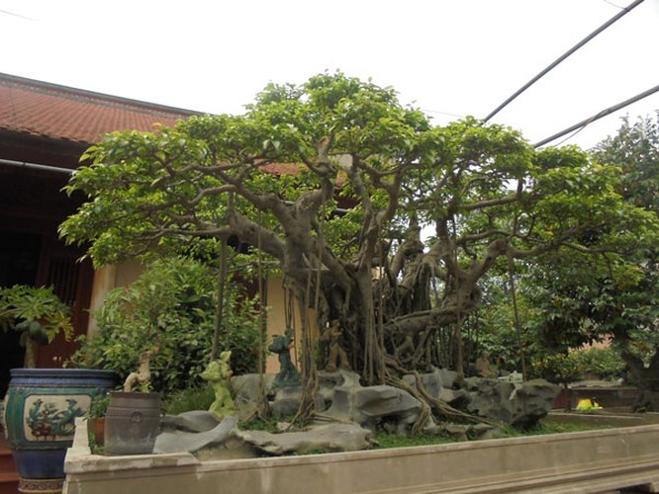Những báu vật trăm tuổi, triệu đô của đại gia Việt ảnh 5