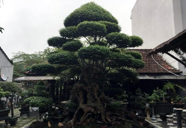 Những báu vật trăm tuổi, triệu đô của đại gia Việt ảnh 4