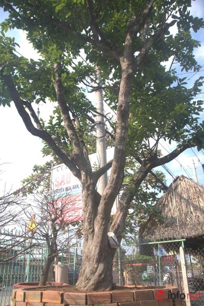 Những báu vật trăm tuổi, triệu đô của đại gia Việt ảnh 7