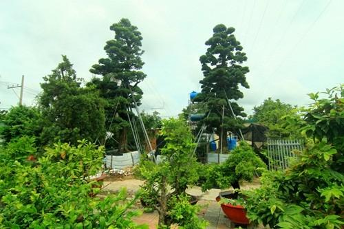 Những báu vật trăm tuổi, triệu đô của đại gia Việt ảnh 3
