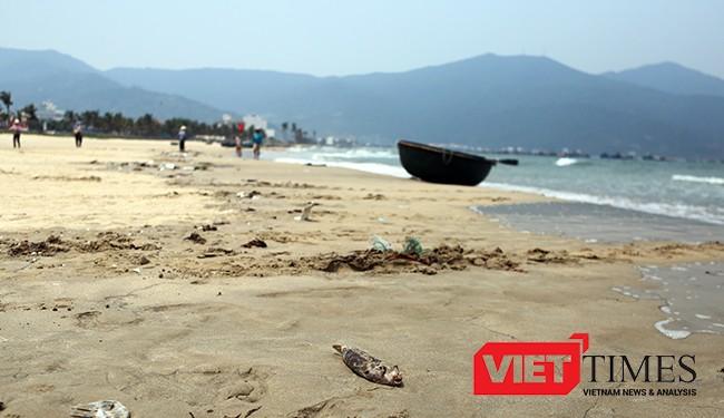 Cá chết rải rác dọc biển Đà Nẵng nhưng không ảnh hưởng đến hoạt động của ngư dân