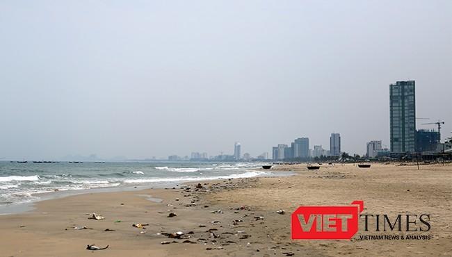 Khu vực biển Mân Thái xuất hiện cá chết dạt vào bờ