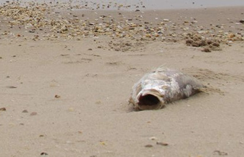 Thủ tướng yêu cầu khẩn trương làm rõ nguyên nhân cá chết ảnh 1