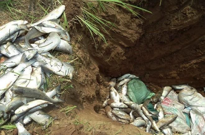 Buốt ruột cá chết nằm như ngả rạ trên sông Bưởi ảnh 7