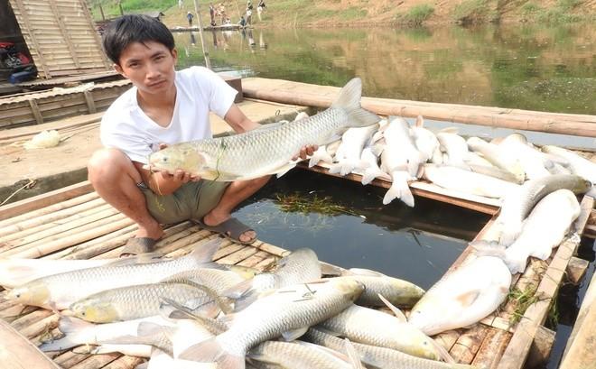 Buốt ruột cá chết nằm như ngả rạ trên sông Bưởi ảnh 5