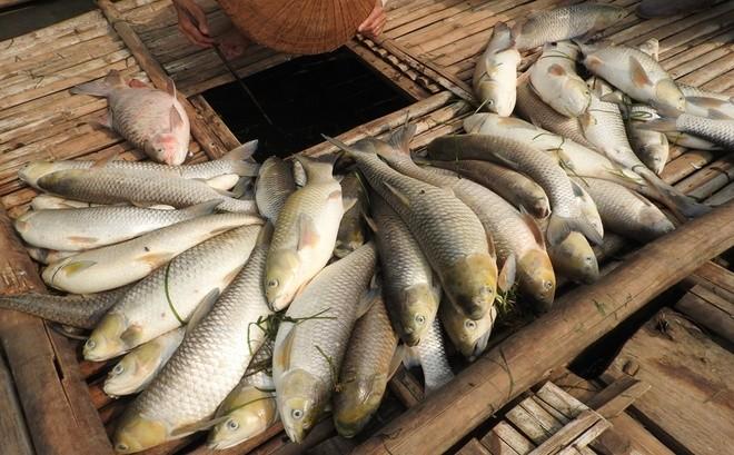 Buốt ruột cá chết nằm như ngả rạ trên sông Bưởi ảnh 8