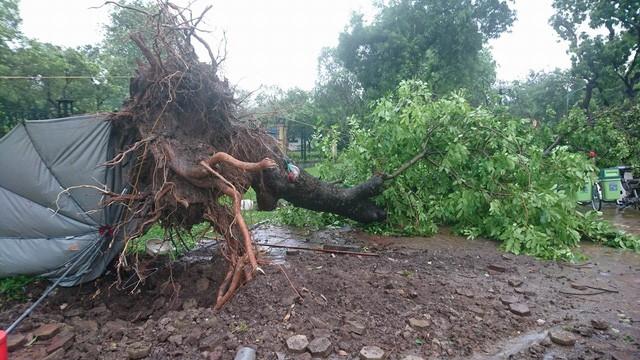 Hà Nội: Nhiều tuyến phố ngập nặng và mất điện vì mưa to, gió giật mạnh ảnh 32