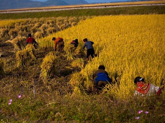 Triều Tiên kết thân với ASEAN vì lợi nhuận kinh tế ảnh 1
