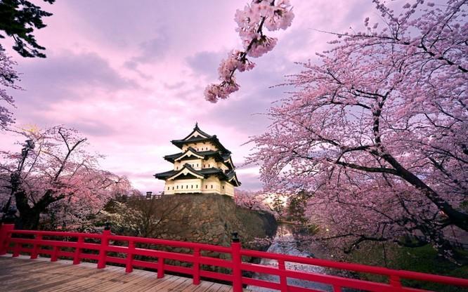 Mùa hoa anh đào Nhật Bản ảnh 6