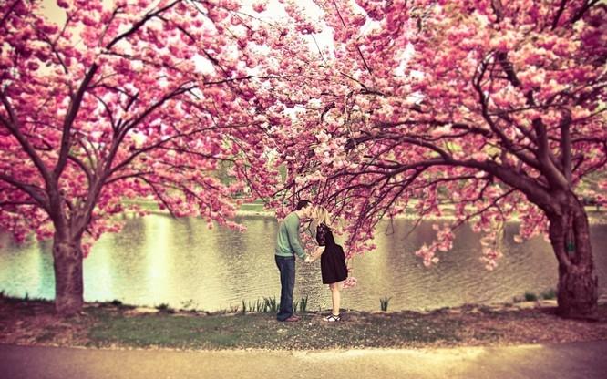 Mùa hoa anh đào Nhật Bản ảnh 18