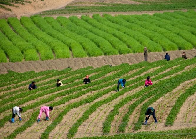 """Cuộc sống bên trong """"vương quốc bí ẩn"""" Triều Tiên ảnh 19"""