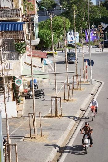 Hà Nội bàn phương án thay thế cây mỡ trên đường Nguyễn Chí Thanh ảnh 1