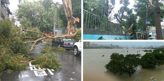 Đài Loan tơi bời trong bão, Trung Quốc sơ tán 158.000 dân ảnh 5