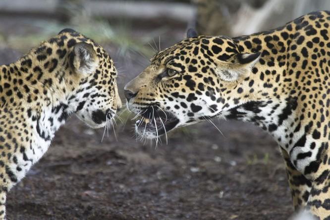 Chùm ảnh cảm động về tình mẫu tử của muôn thú tự nhiên ảnh 16