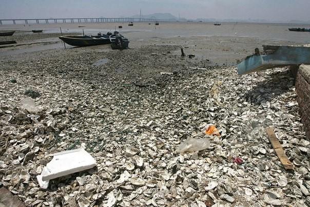 Chùm ảnh thảm họa môi trường khủng khiếp ở Trung Quốc ảnh 44