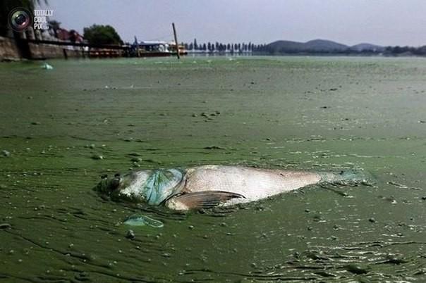 Chùm ảnh thảm họa môi trường khủng khiếp ở Trung Quốc ảnh 49