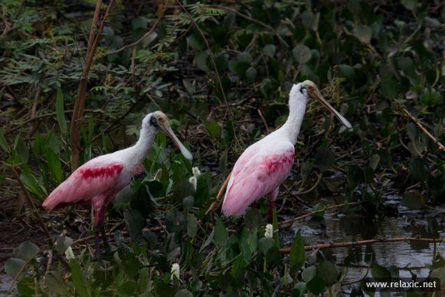Kỳ thú khu tự nhiên hoang dã Pantanal - Brazil ảnh 3