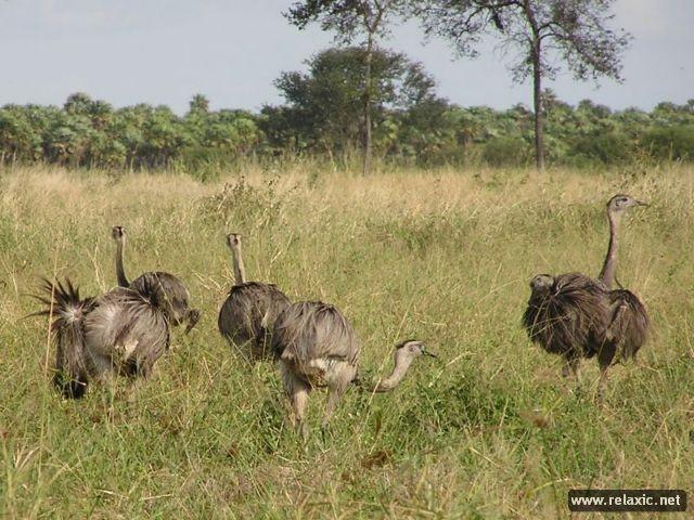 Kỳ thú khu tự nhiên hoang dã Pantanal - Brazil ảnh 4
