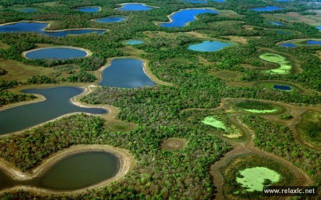 Kỳ thú khu tự nhiên hoang dã Pantanal - Brazil ảnh 6