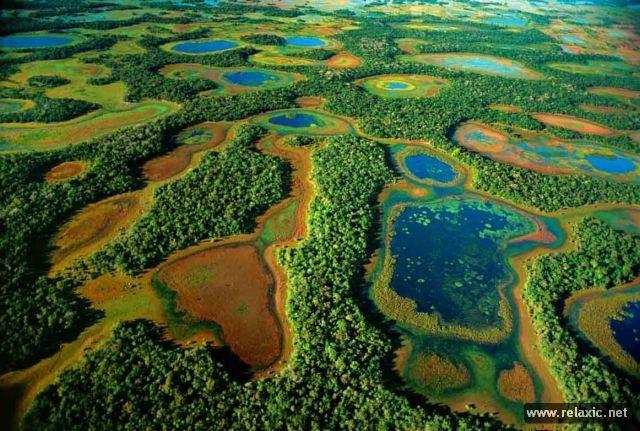 Kỳ thú khu tự nhiên hoang dã Pantanal - Brazil ảnh 7