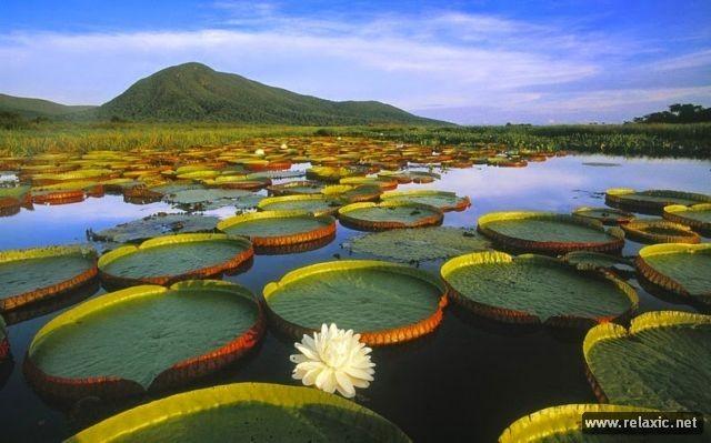 Kỳ thú khu tự nhiên hoang dã Pantanal - Brazil ảnh 10