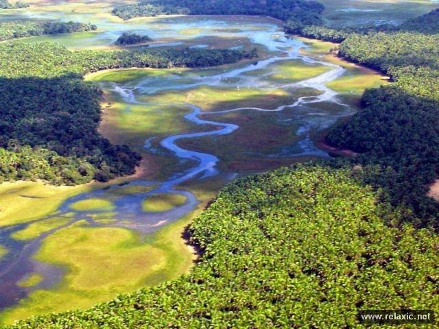 Kỳ thú khu tự nhiên hoang dã Pantanal - Brazil ảnh 12