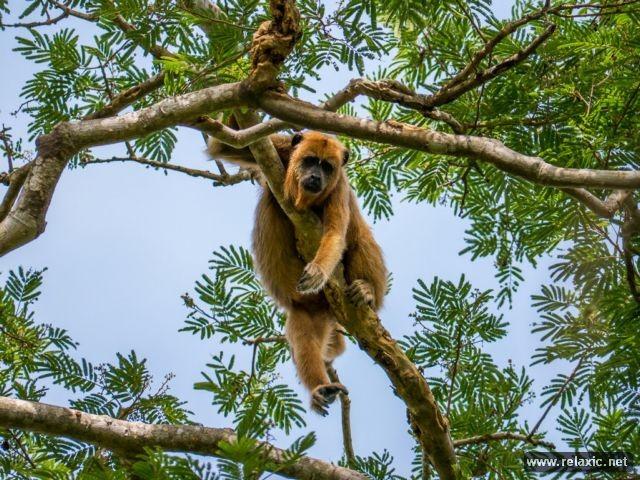 Kỳ thú khu tự nhiên hoang dã Pantanal - Brazil ảnh 13