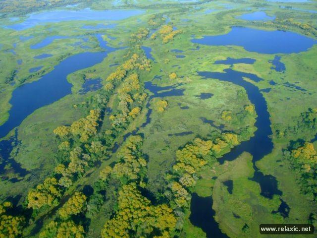 Kỳ thú khu tự nhiên hoang dã Pantanal - Brazil ảnh 14
