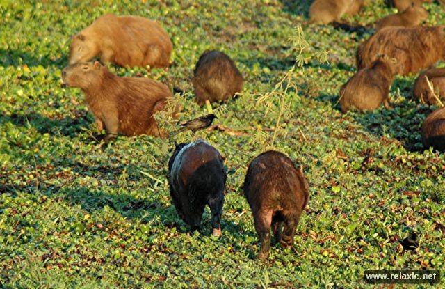 Kỳ thú khu tự nhiên hoang dã Pantanal - Brazil ảnh 15